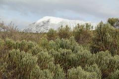 вчера в Африке выпал снег