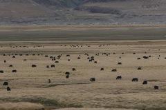 025_tibet2011