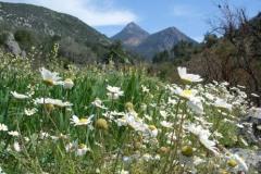 Весна в горах.