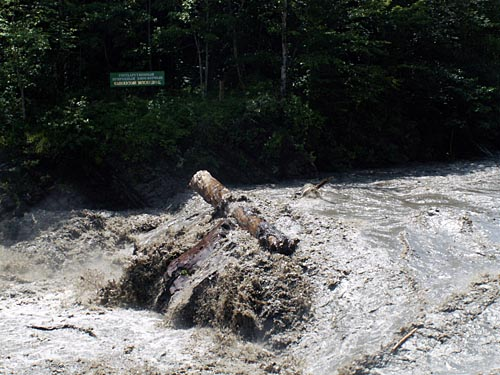 Киши в паводок