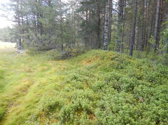 Фото №9 Остатки финских укреплений времён Великой Отечественной Войны