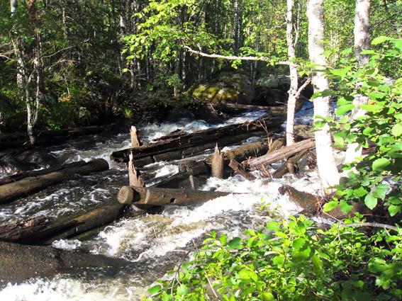Фото №17 Лотки на реке Норва. Брёвна, вода, обнос