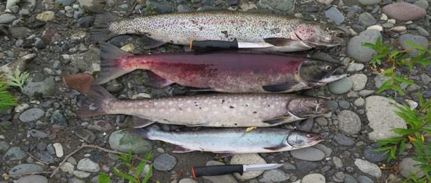 Отчет о водном туристском маршруте 3 (третьей) категории сложности (катамараны) по реке Правая Жупанова и Жупанова, реке Левая Авача и Авача