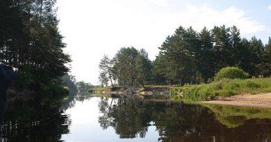 Первые островки леса