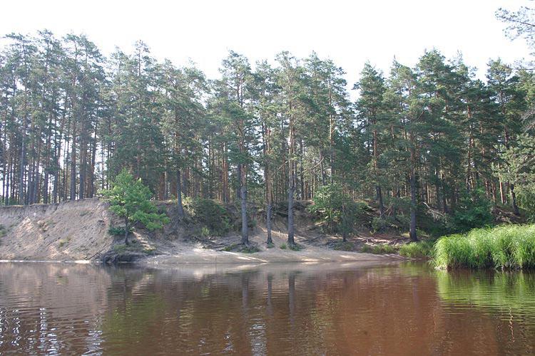 Первая стоянка в лесу
