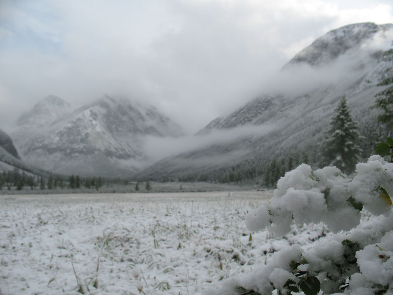Алтай-2009 / Северо-Чуйские — Южно-Чуйские белки