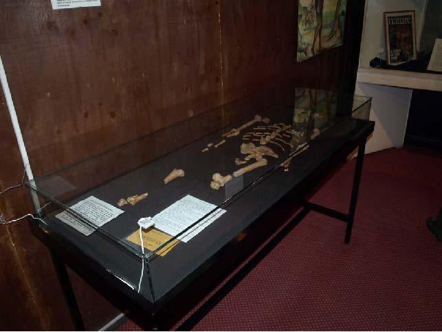 Рис.77. Останки самого древнего человека на Земле – Люси.